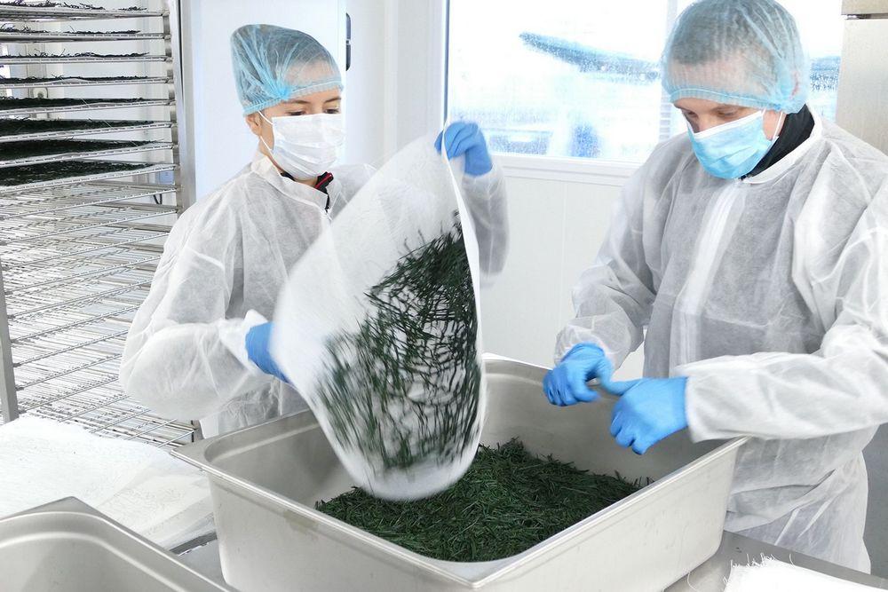 olivier-microalgues-oma-producteur-francais-spiruline