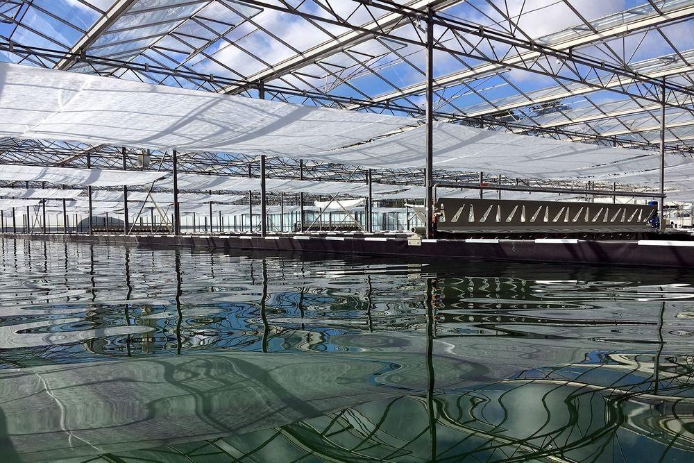 bassin-production-spiruline-oma